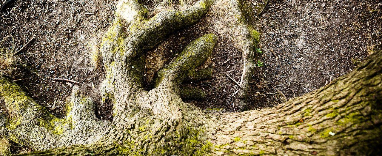 tree-1320990_1280 sve