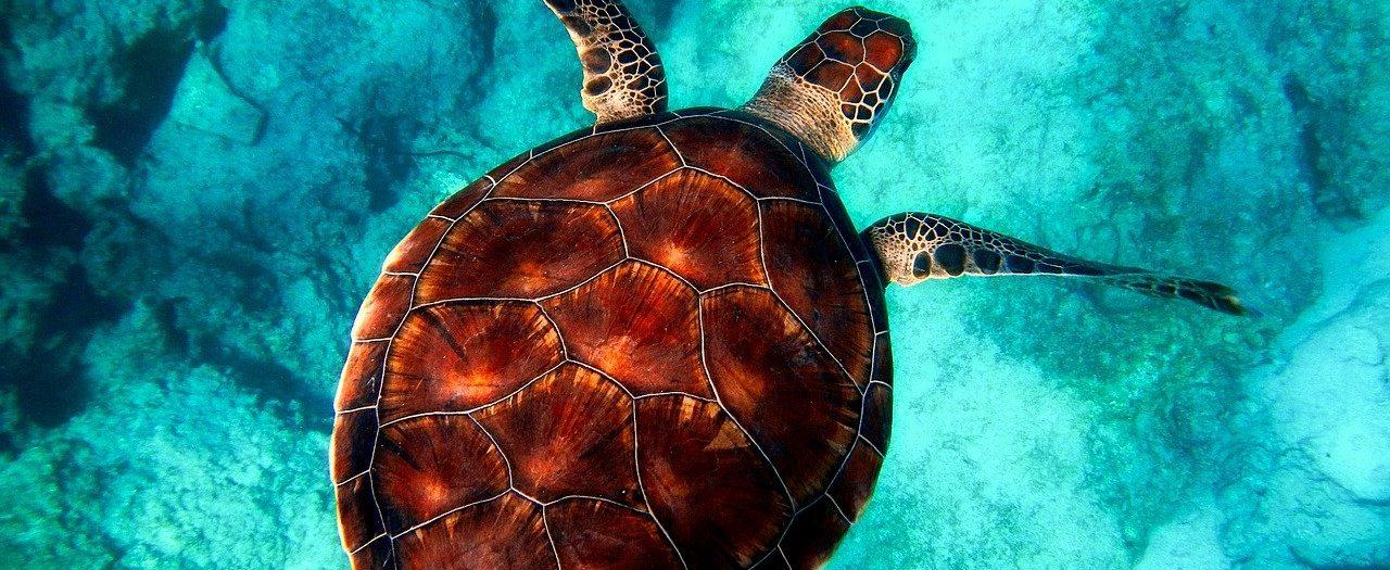 Campo de trabajo Mexico tortugas marinas